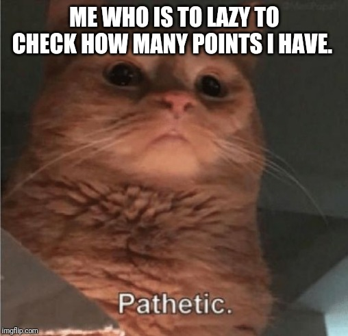 Pathetic Cat | ME WHO IS TO LAZY TO CHECK HOW MANY POINTS I HAVE. | image tagged in pathetic cat | made w/ Imgflip meme maker