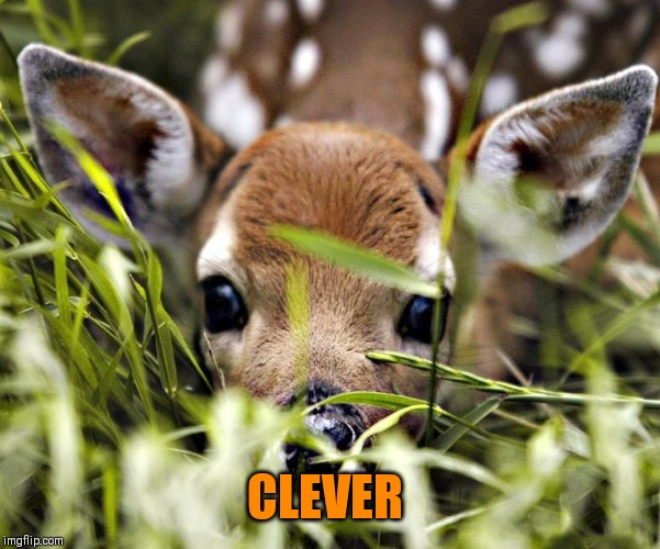 CLEVER | image tagged in timid deer | made w/ Imgflip meme maker