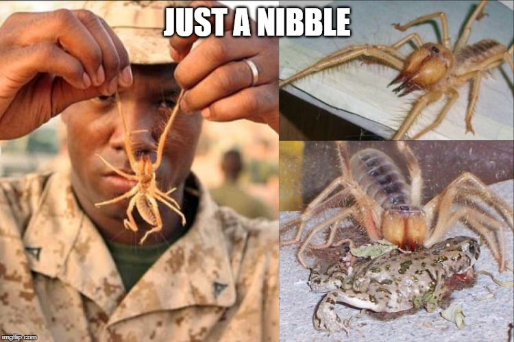 JUST A NIBBLE | made w/ Imgflip meme maker