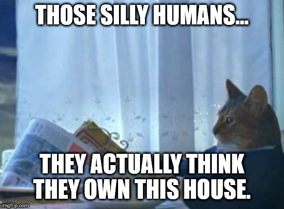 I Should Buy A Boat Cat | THOSE SILLY HUMANS... THEY ACTUALLY THINK THEY OWN THIS HOUSE. | image tagged in memes,i should buy a boat cat | made w/ Imgflip meme maker