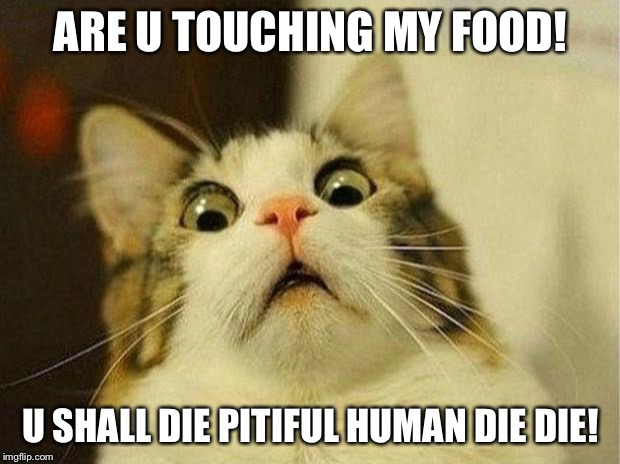 Scared Cat |  ARE U TOUCHING MY FOOD! U SHALL DIE PITIFUL HUMAN DIE DIE! | image tagged in memes,scared cat | made w/ Imgflip meme maker