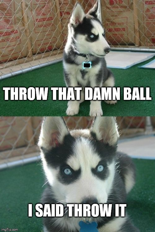 Insanity Puppy |  THROW THAT DAMN BALL; I SAID THROW IT | image tagged in memes,insanity puppy | made w/ Imgflip meme maker