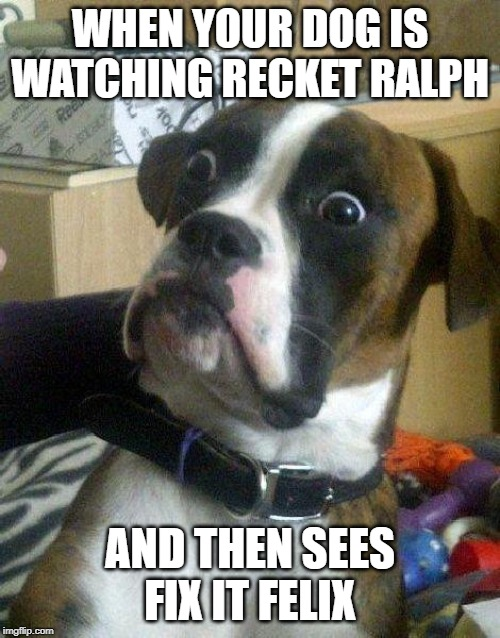 Surprised Dog | WHEN YOUR DOG IS WATCHING RECKET RALPH AND THEN SEES FIX IT FELIX | image tagged in surprised dog | made w/ Imgflip meme maker