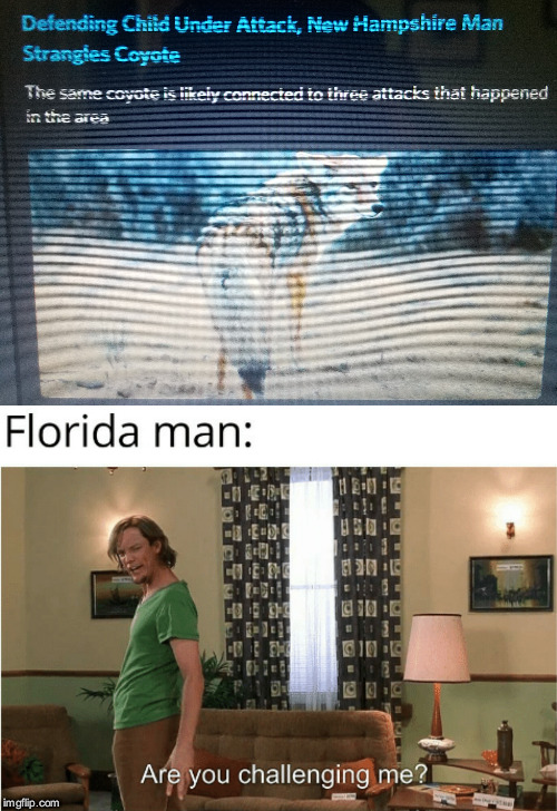 New Hampshire is my birth state | image tagged in florida man,new hampshire,are you challenging me,shaggy,scooby doo,scooby doo shaggy | made w/ Imgflip meme maker
