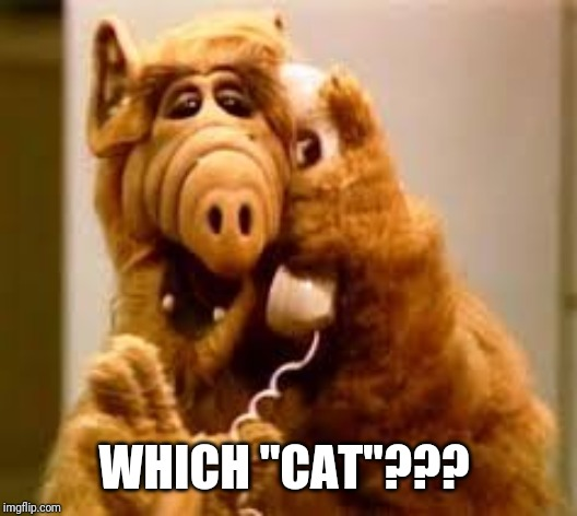 "alf | WHICH ""CAT""??? 