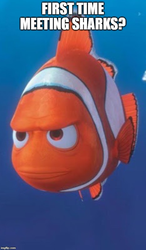 Nemo's dad | FIRST TIME MEETING SHARKS? | image tagged in nemo's dad | made w/ Imgflip meme maker
