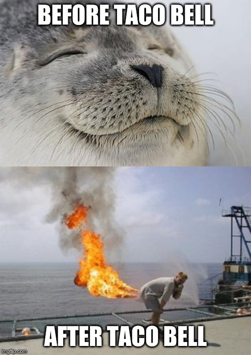 BEFORE TACO BELL AFTER TACO BELL | image tagged in memes,satisfied seal,explosive diarrhea | made w/ Imgflip meme maker