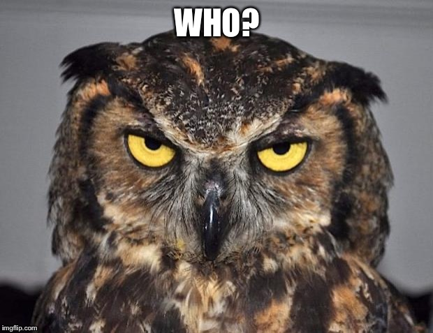 Who? | WHO? | image tagged in angry owl,funny,funny meme,animal meme,memes,funny animal meme | made w/ Imgflip meme maker