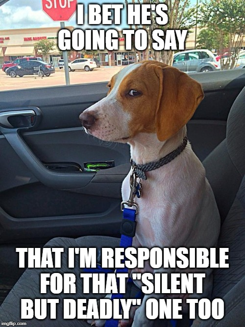 "Suspicious Dog |  I BET HE'S GOING TO SAY; THAT I'M RESPONSIBLE FOR THAT ""SILENT BUT DEADLY"" ONE TOO 
