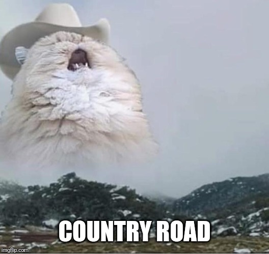 Country Roads Cat | COUNTRY ROAD | image tagged in country roads cat | made w/ Imgflip meme maker