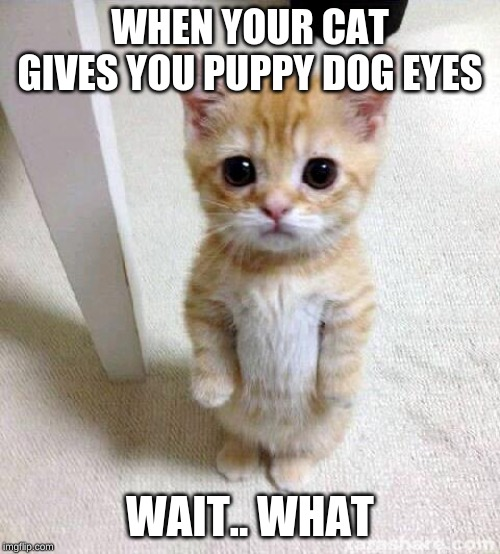 Cute Cat |  WHEN YOUR CAT GIVES YOU PUPPY DOG EYES; WAIT.. WHAT | image tagged in memes,cute cat | made w/ Imgflip meme maker