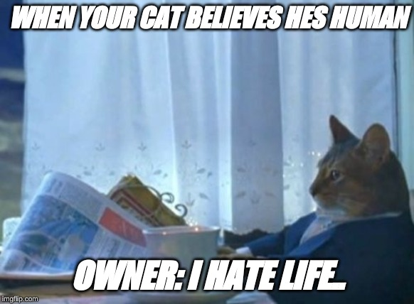 I Should Buy A Boat Cat | WHEN YOUR CAT BELIEVES HES HUMAN OWNER: I HATE LIFE.. | image tagged in memes,i should buy a boat cat | made w/ Imgflip meme maker