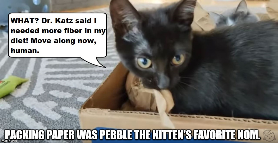 Packing paper tastes great and it's less filling! | PACKING PAPER WAS PEBBLE THE KITTEN'S FAVORITE NOM. | image tagged in lolcats,kittenacademy,cute kittens | made w/ Imgflip meme maker