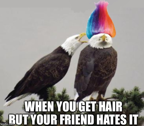 Bald eagle now a hair eagle | WHEN YOU GET HAIR BUT YOUR FRIEND HATES IT | image tagged in eagle,hair,friends,sad | made w/ Imgflip meme maker