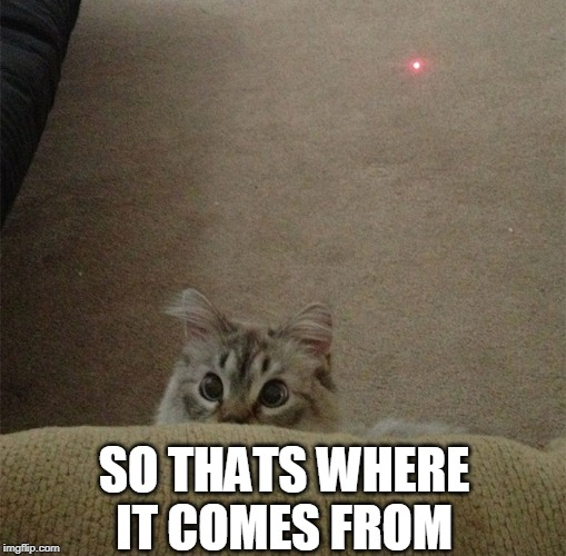 YOU'RE CAUGHT | SO THATS WHERE IT COMES FROM | image tagged in cats,funny cats | made w/ Imgflip meme maker