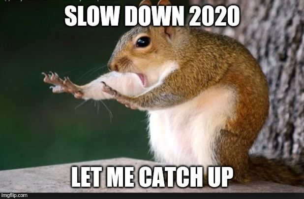 SLOW DOWN 2020 LET ME CATCH UP | image tagged in hold up squirrel | made w/ Imgflip meme maker