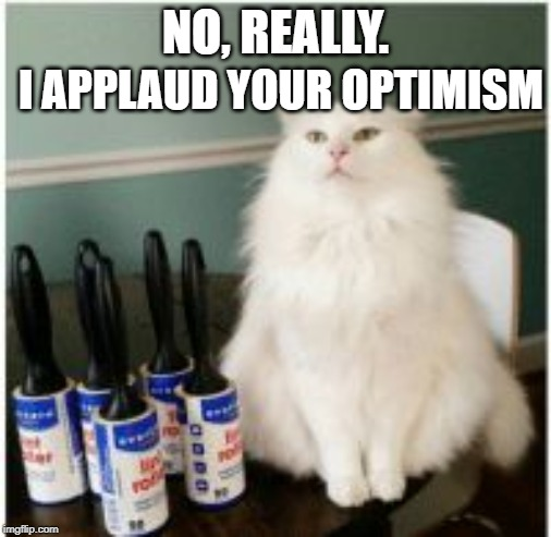 White cat | NO, REALLY. I APPLAUD YOUR OPTIMISM | image tagged in white cat | made w/ Imgflip meme maker