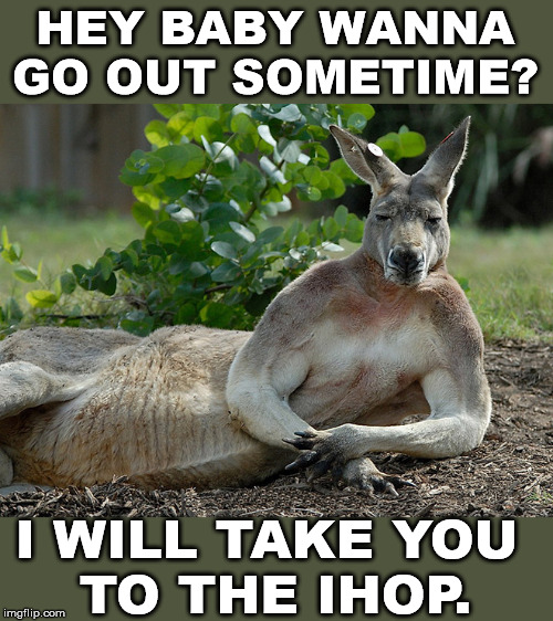Kangaroo got game | HEY BABY WANNA GO OUT SOMETIME? I WILL TAKE YOU  TO THE IHOP. | image tagged in kangaroo,dating | made w/ Imgflip meme maker