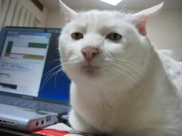 serious cat Meme Generator - Imgflip