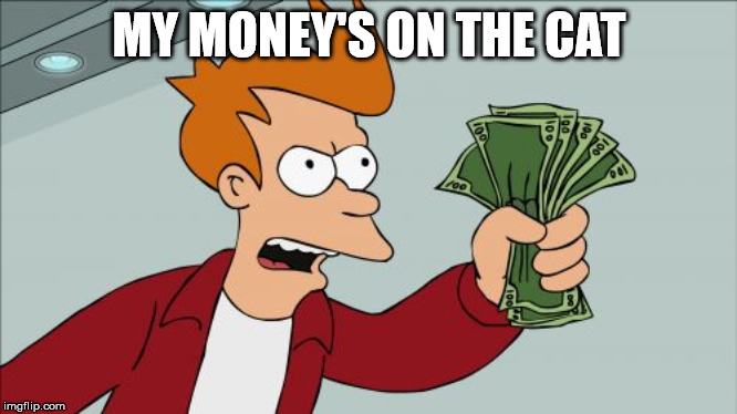 Shut Up And Take My Money Fry Meme | MY MONEY'S ON THE CAT | image tagged in memes,shut up and take my money fry | made w/ Imgflip meme maker