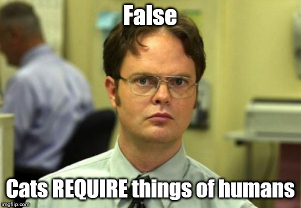 Dwight Schrute Meme | False Cats REQUIRE things of humans | image tagged in memes,dwight schrute | made w/ Imgflip meme maker