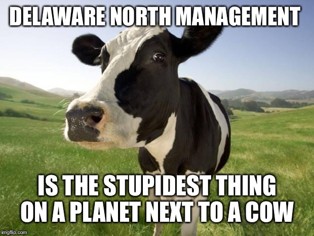 cow | DELAWARE NORTH MANAGEMENT IS THE STUPIDEST THING ON A PLANET NEXT TO A COW | image tagged in cow | made w/ Imgflip meme maker