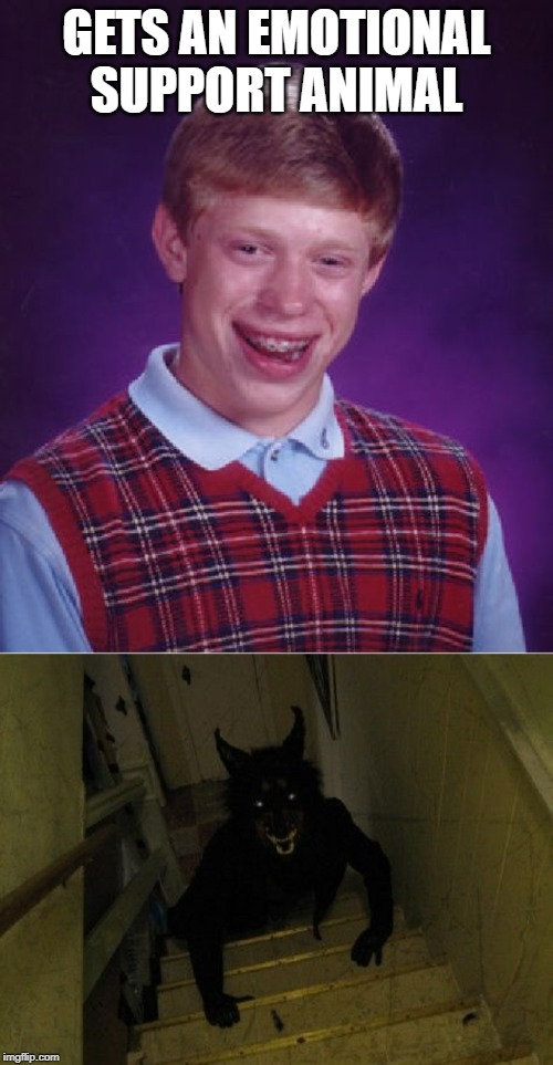 Brian never can get any good luck, now can he? |  GETS AN EMOTIONAL SUPPORT ANIMAL | image tagged in memes,bad luck brian,werewolf | made w/ Imgflip meme maker