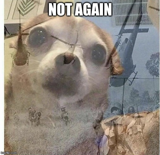 PTSD Chihuahua | NOT AGAIN | image tagged in ptsd chihuahua | made w/ Imgflip meme maker