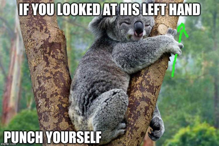 Epic Koalas |  IF YOU LOOKED AT HIS LEFT HAND; PUNCH YOURSELF | image tagged in koala,finger circle,hands,upvote | made w/ Imgflip meme maker