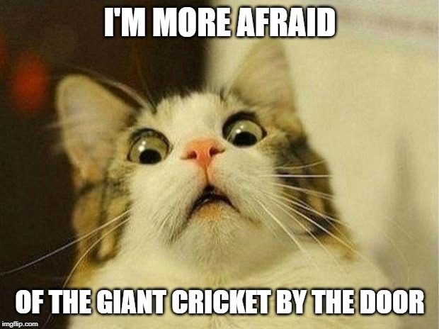 Scared Cat Meme | I'M MORE AFRAID OF THE GIANT CRICKET BY THE DOOR | image tagged in memes,scared cat | made w/ Imgflip meme maker