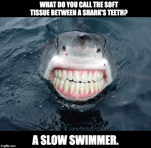 sharkteeth | WHAT DO YOU CALL THE SOFT TISSUE BETWEEN A SHARK'S TEETH? A SLOW SWIMMER. | image tagged in sharkteeth | made w/ Imgflip meme maker