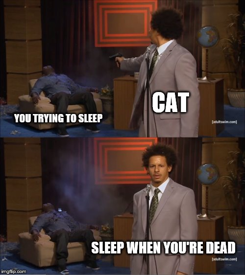 My cat was hungry all night this time. |  CAT; YOU TRYING TO SLEEP; SLEEP WHEN YOU'RE DEAD | image tagged in memes,who killed hannibal,cats,cat | made w/ Imgflip meme maker