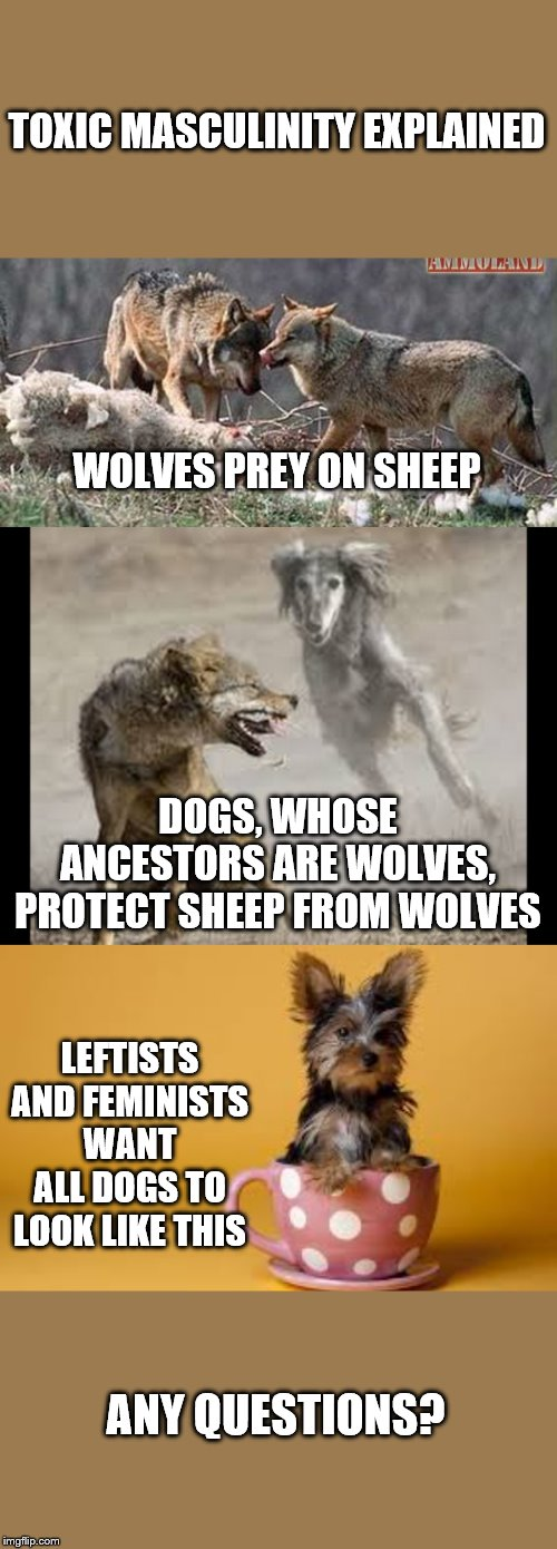 Stop emasculating men |  TOXIC MASCULINITY EXPLAINED; WOLVES PREY ON SHEEP; DOGS, WHOSE ANCESTORS ARE WOLVES, PROTECT SHEEP FROM WOLVES; LEFTISTS AND FEMINISTS WANT ALL DOGS TO LOOK LIKE THIS; ANY QUESTIONS? | image tagged in wolves,dogs,toxic masculinity,leftists,feminists | made w/ Imgflip meme maker