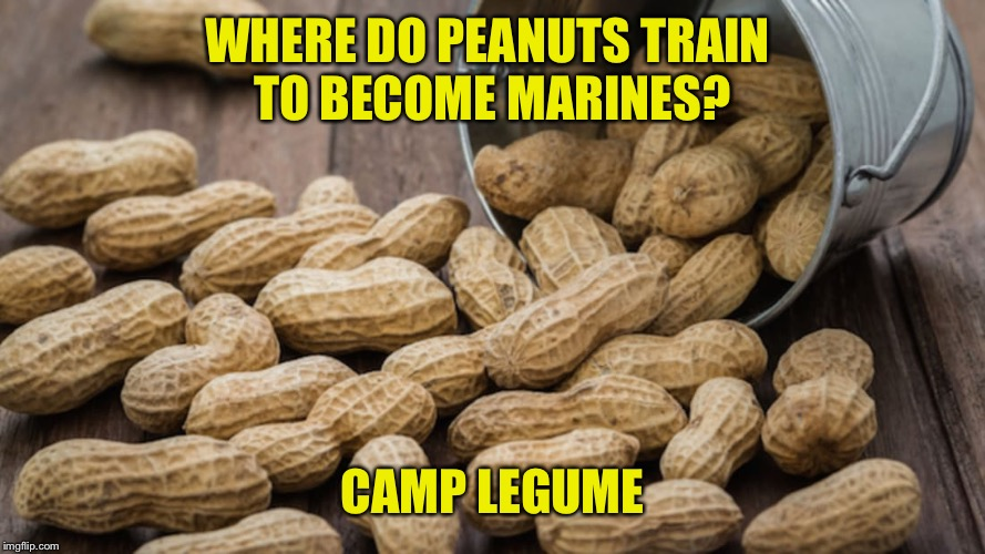 Wry Roasted Peanuts |  WHERE DO PEANUTS TRAIN  TO BECOME MARINES? CAMP LEGUME | image tagged in peanuts,legume,marine,camp lejeune | made w/ Imgflip meme maker
