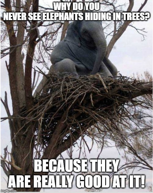 elephants hide in trees | WHY DO YOU NEVER SEE ELEPHANTS HIDING IN TREES? BECAUSE THEY ARE REALLY GOOD AT IT! | image tagged in elephants,trees,hiding in plain sight | made w/ Imgflip meme maker