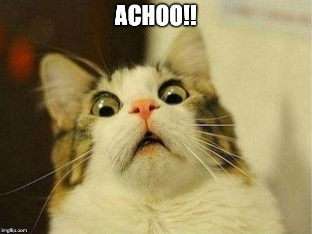 Scared Cat |  ACHOO!! | image tagged in memes,scared cat | made w/ Imgflip meme maker