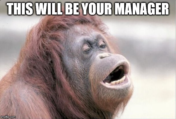 Monkey OOH Meme | THIS WILL BE YOUR MANAGER | image tagged in memes,monkey ooh | made w/ Imgflip meme maker