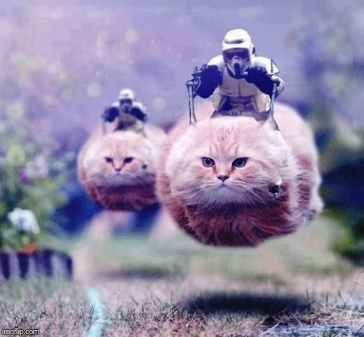 Hovercats | image tagged in hovercats | made w/ Imgflip meme maker
