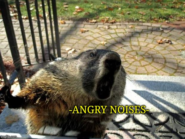 -ANGRY NOISES- | image tagged in angry groundhog | made w/ Imgflip meme maker