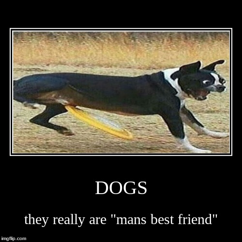"DOGS | they really are ""mans best friend"" 