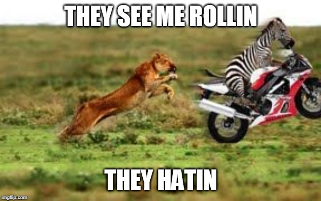 THEY SEE ME ROLLIN; THEY HATIN | image tagged in lion,zebra,motorcycle,they see me rolling | made w/ Imgflip meme maker