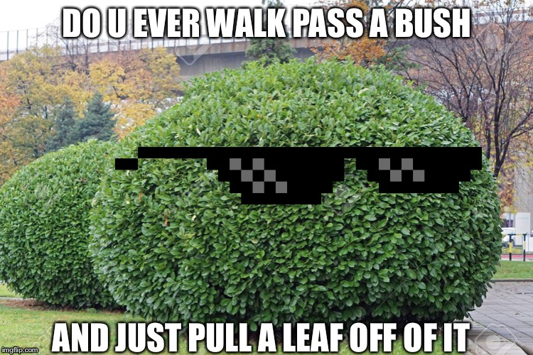 Nah or ya | DO U EVER WALK PASS A BUSH AND JUST PULL A LEAF OFF OF IT | image tagged in bush | made w/ Imgflip meme maker