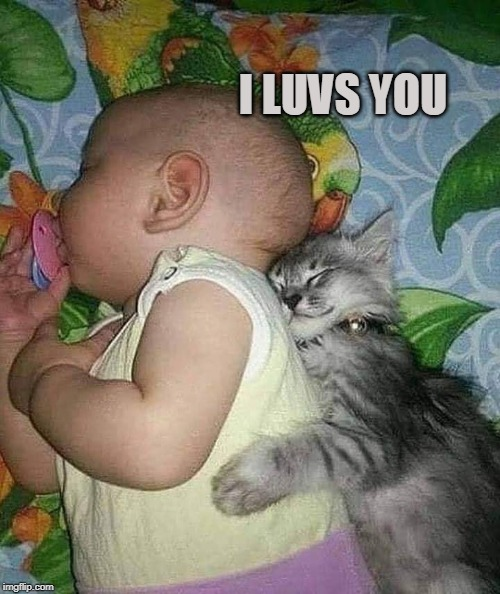 I LUVS YOU | image tagged in cats,baby,kitten | made w/ Imgflip meme maker