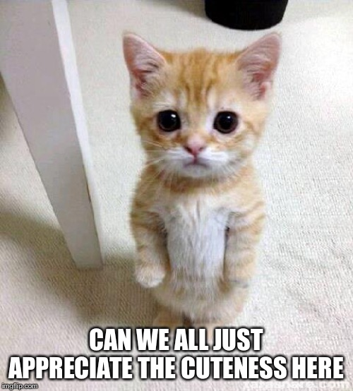 Cute Cat |  CAN WE ALL JUST APPRECIATE THE CUTENESS HERE | image tagged in memes,cute cat | made w/ Imgflip meme maker