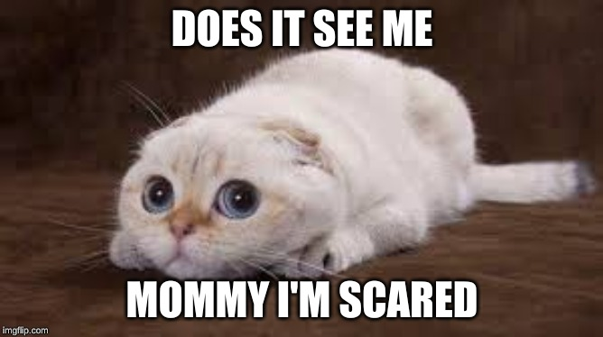 DOES IT SEE ME; MOMMY I'M SCARED | image tagged in cute,cat,kitty,cute kittens,cute cats,cute cat | made w/ Imgflip meme maker