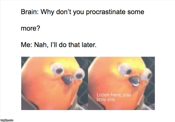 listen here you little shit bird Memes & GIFs - Imgflip