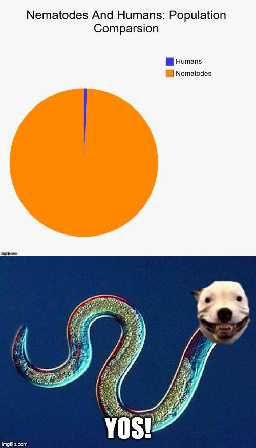 Nematodes rule! | YOS! | image tagged in nematodes,comparison,population size,nematodes vs humans,memes,yos | made w/ Imgflip meme maker