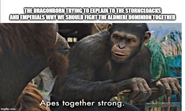 THE DRAGONBORN TRYING TO EXPLAIN TO THE STORNCLOACKS AND EMPERIALS WHY WE SHOULD FIGHT THE ALDMERI DOMINION TOGETHER | image tagged in skyrim meme,skyrim | made w/ Imgflip meme maker