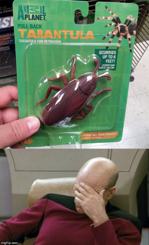 When you skip biology class | image tagged in memes,captain picard facepalm,you had one job,tarantula | made w/ Imgflip meme maker