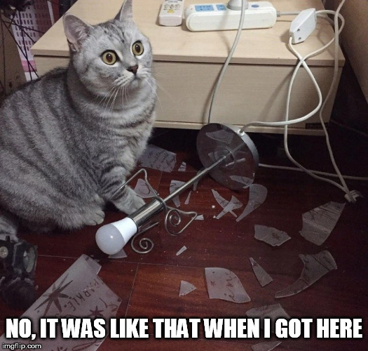 NO, IT WAS LIKE THAT WHEN I GOT HERE | image tagged in cat,lamp | made w/ Imgflip meme maker